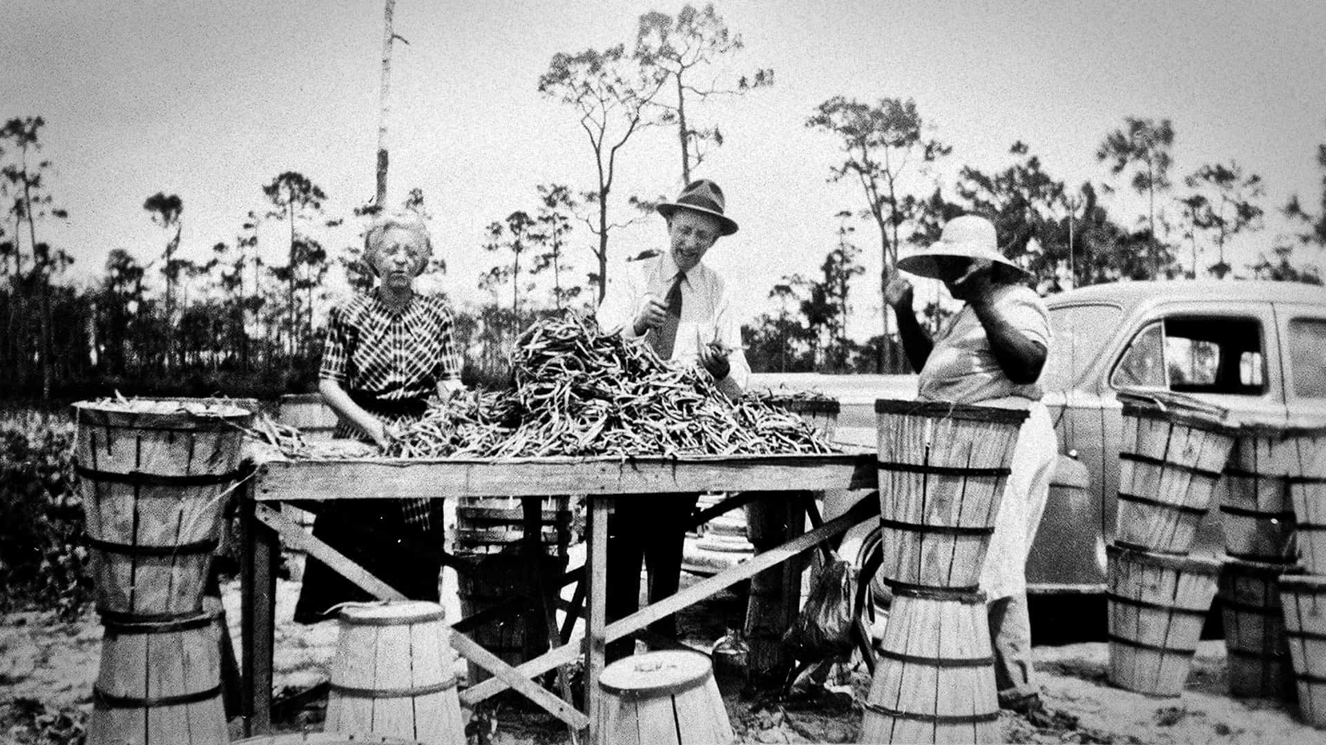 Agriculture in early Deerfield Beach, FL